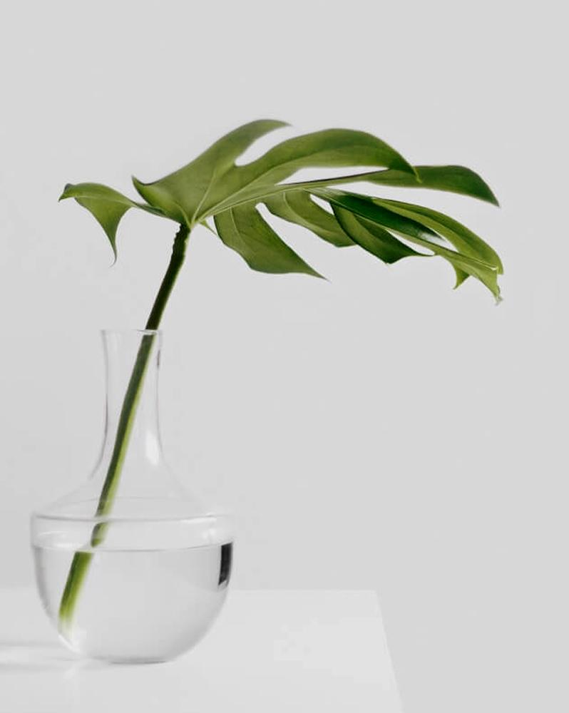 minimalism blogs