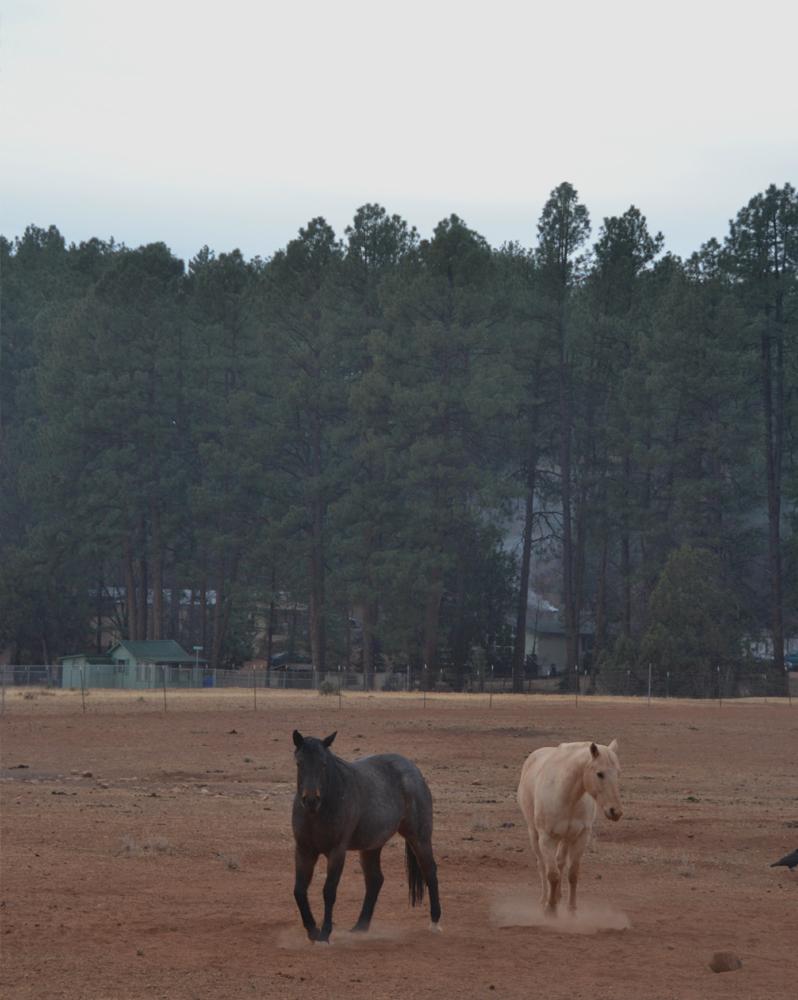 horses arizona