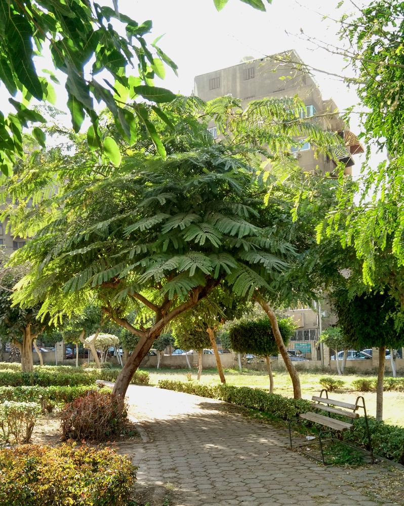 cairo suburb nasr city